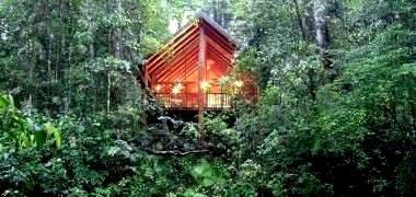 Отель The Canopy Treehouses