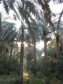Al Ain Oasis 2