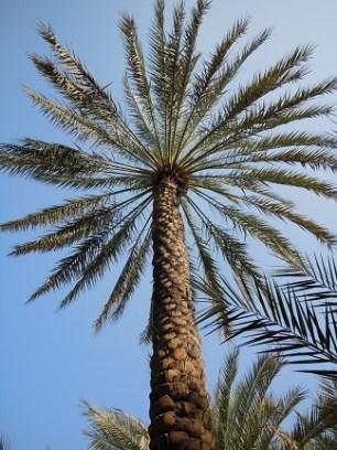 Al Ain Oasis 24