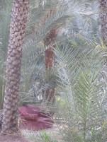 Al Ain Oasis 26