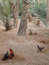 Al Ain Oasis 8