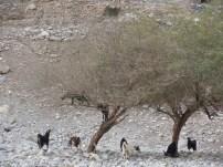 Wadi Al-Baih 11