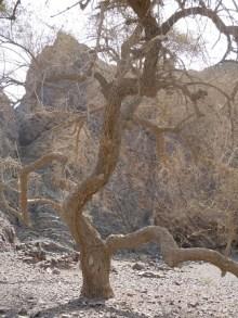 Wadi Kub 19
