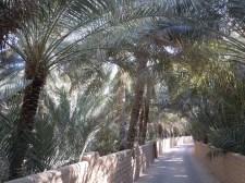 Al Qattara 20