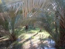 Hili Oasis 12