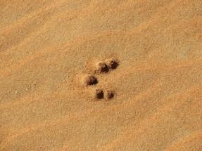 Footprints 13