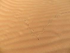 Footprints 16