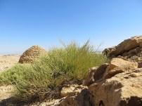 Hafeet Tombs 5