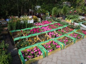 Plant Souk 2