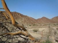 wadi Helo 13