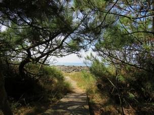 coastal-walk-20
