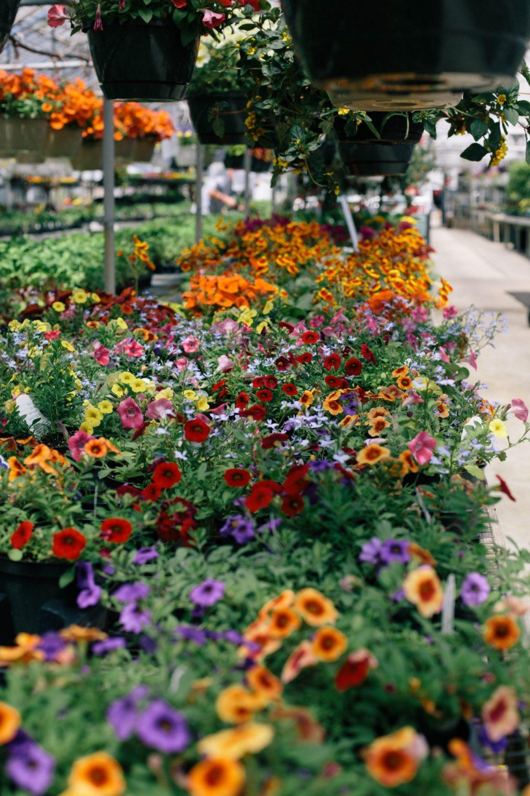Cleveland-Puritas-Nursery-and-Garden-Center-1