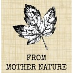 Simple Fall Crafts From Mother Nature