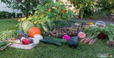 Getting Our Vegetable Garden Prepared For Winter