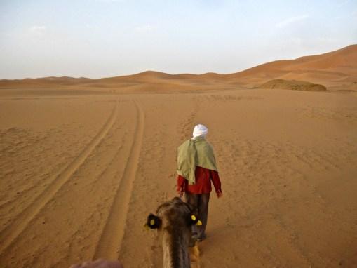 Desert guide