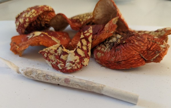 Smoking Amanita muscaria