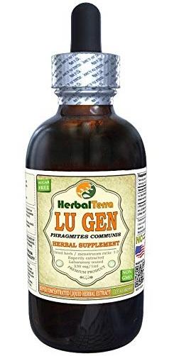 Lu Gen - Phragmites in Chinese Medicine