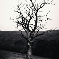 Poem: Do you think a dry tree, could reborn itself?