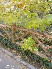 39 Inspired Garden Gates For A Beautiful Backyard 24