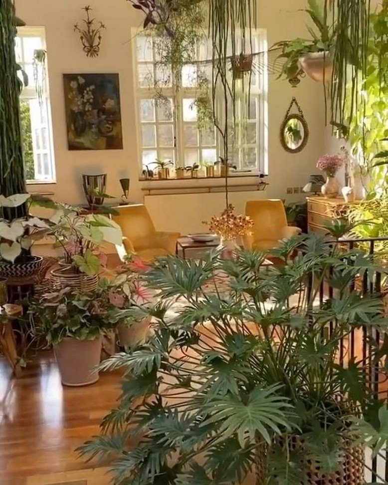 11 Indoor Plants For Home Or Office – Home Decor 27