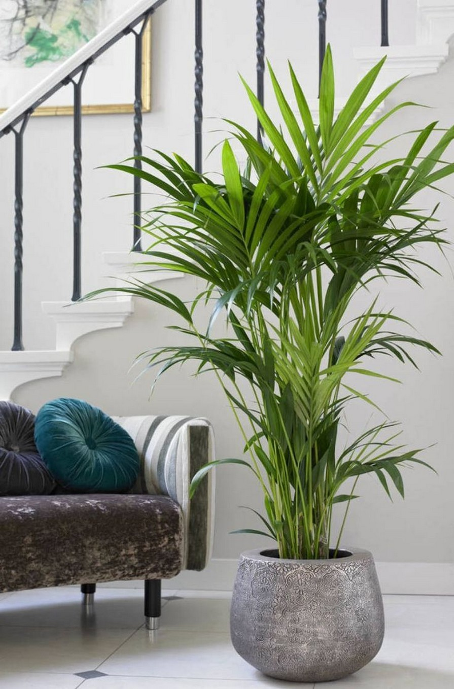 11 Indoor Plants For Home Or Office – Home Decor 30