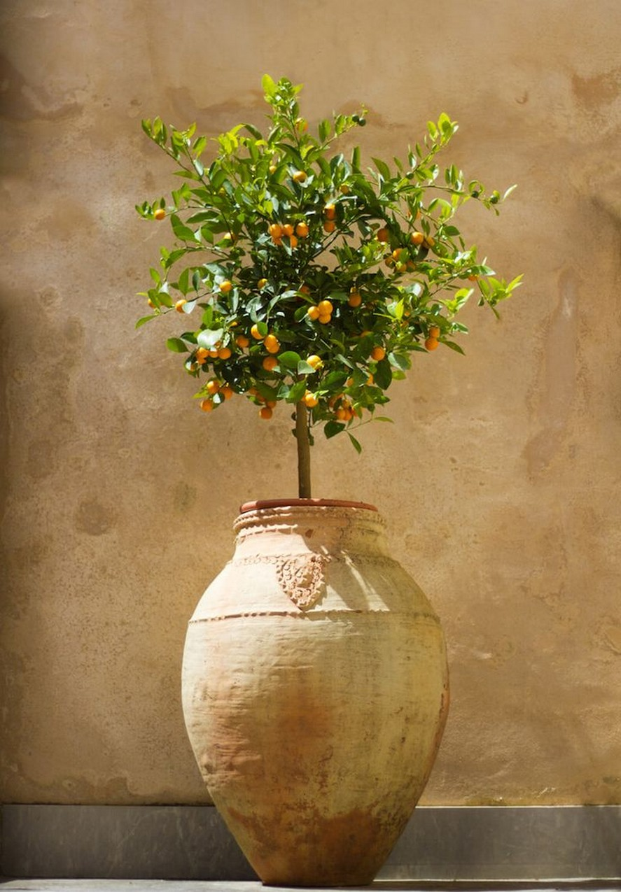 10 Indoor Plant Care Tips Home Decor 6