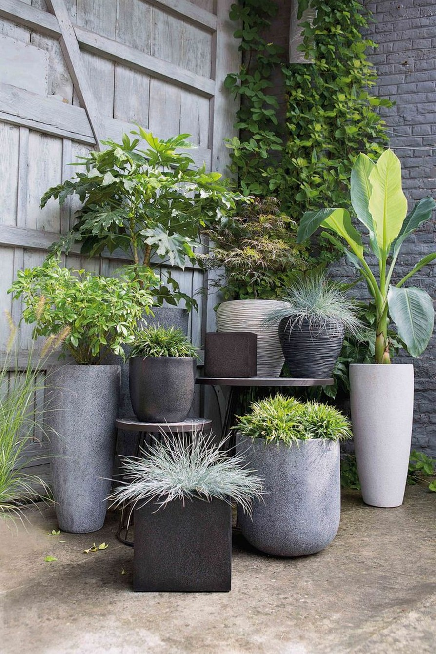 11 Outdoor Potted Plants Grow Helping 13