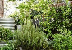 11 Outdoor Potted Plants Grow Helping 17