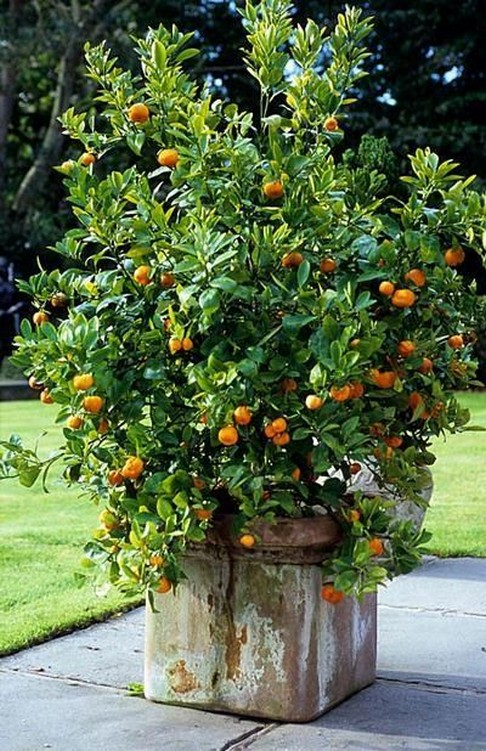 11 Outdoor Potted Plants Grow Helping 18