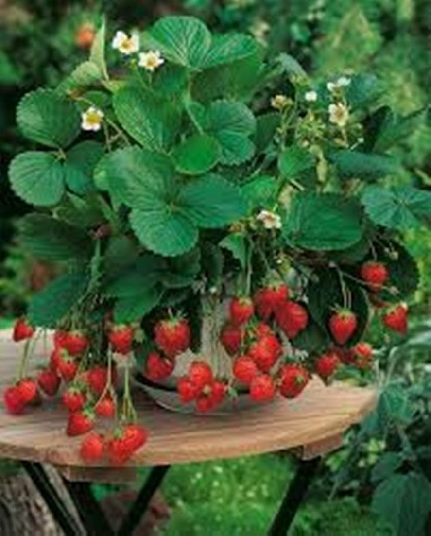 12 Container Gardening Ideas For Pots And Planting Herbs Home Decor 11