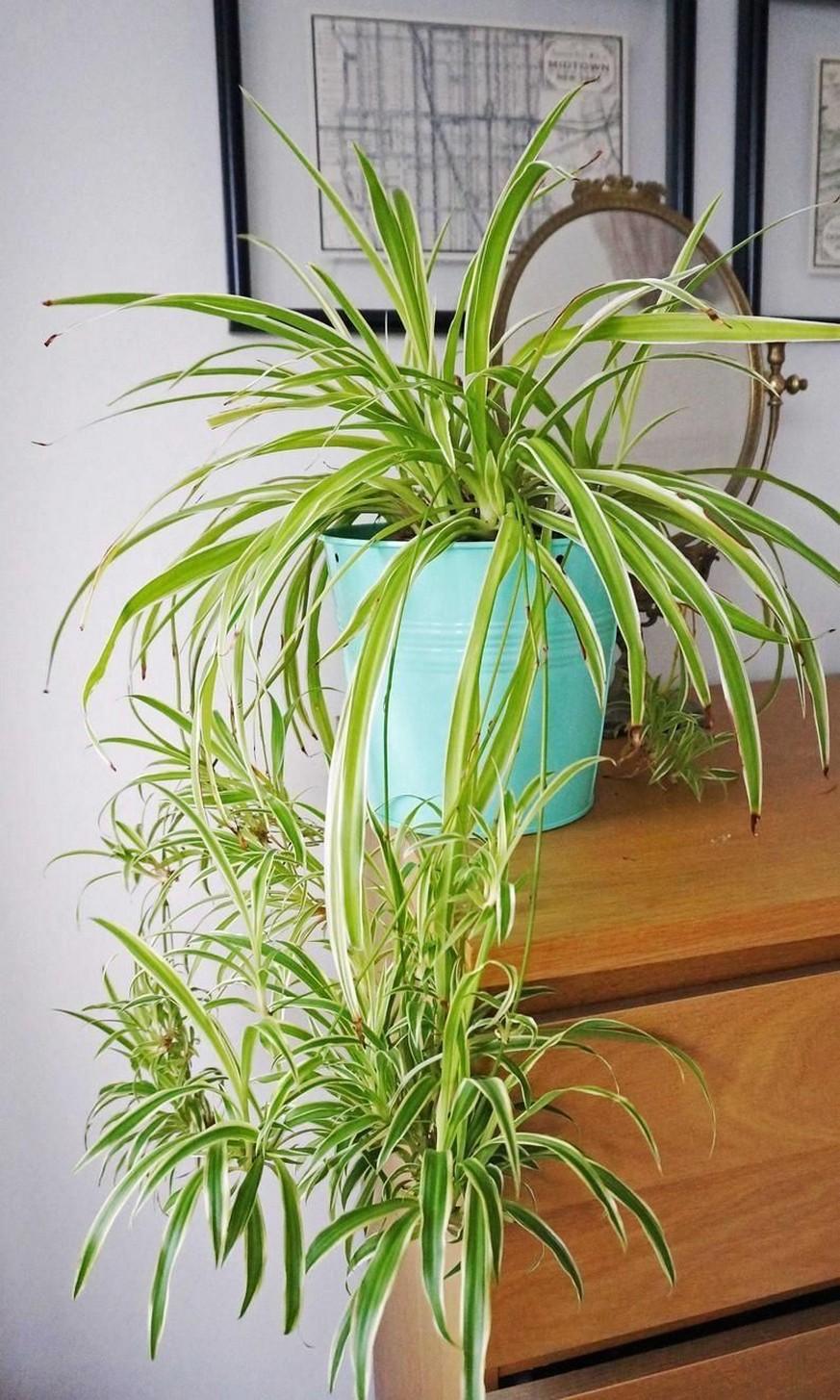 48 Popular Indoor Plants For Tropics Zone 11