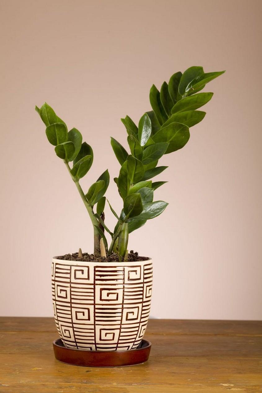 48 Popular Indoor Plants For Tropics Zone 3