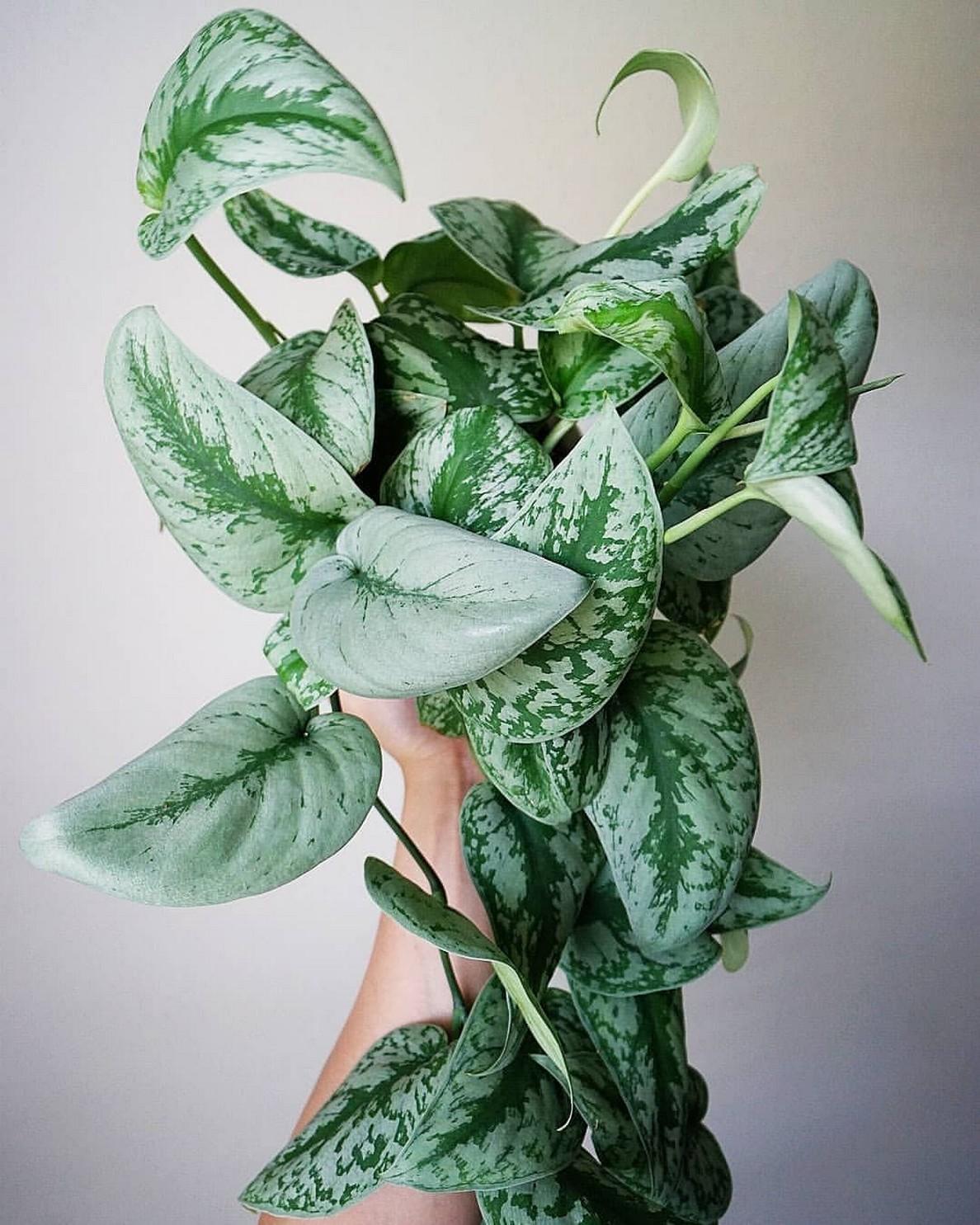 48 Popular Indoor Plants For Tropics Zone 30
