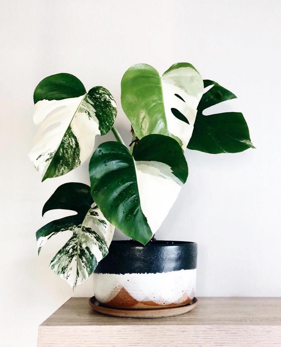 48 Popular Indoor Plants For Tropics Zone 41