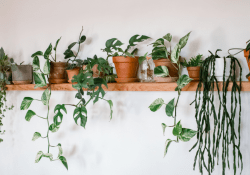 HOUSEPLANTS – IT'S TIME TO BRING THE WONDERFUL OUTSIDE IN