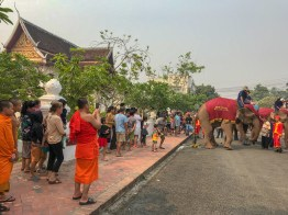 A Monk filming an Elephant taking a dump in the Street