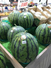 Beautiful Melons