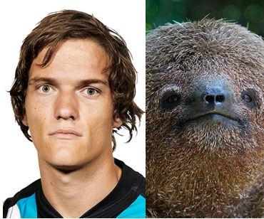 polec v sloth