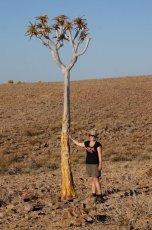 EInsamer Baum am Fishriver Canyo