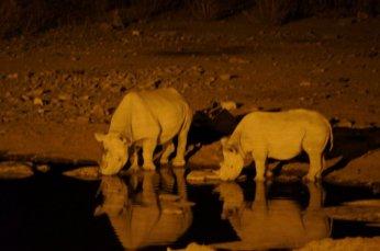 Nachts am Wasserloch: Nashornmutter & Jungtier
