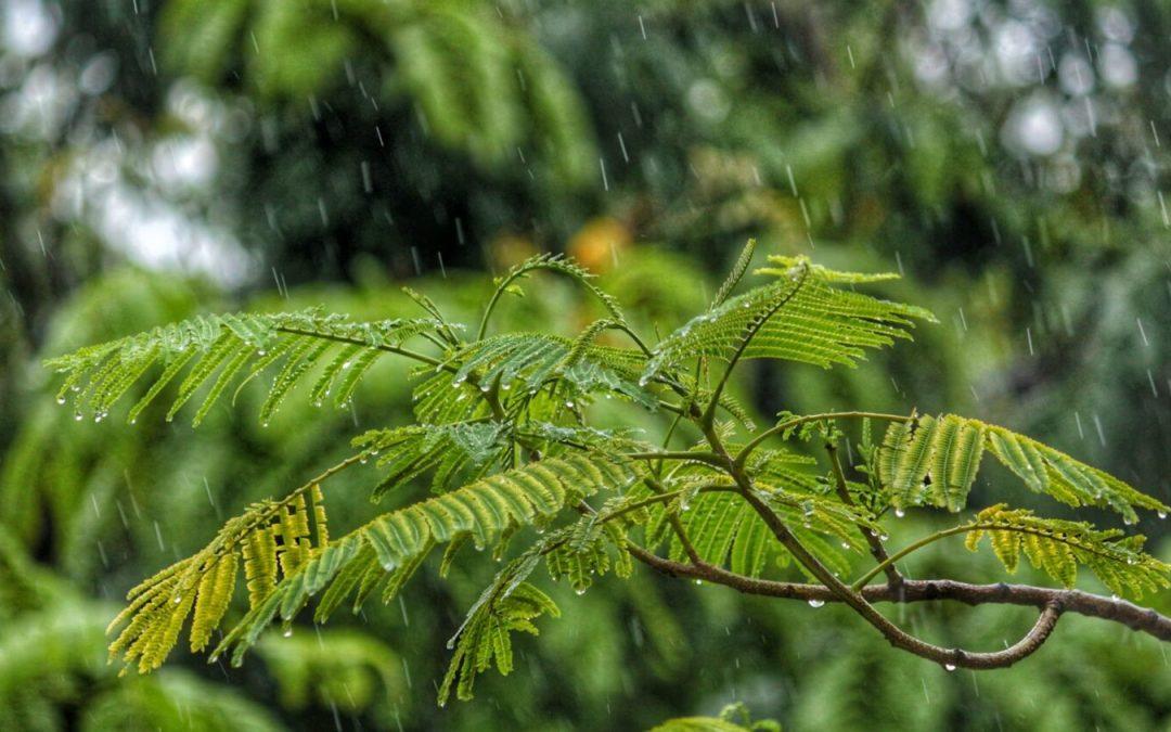 Rain, finally!