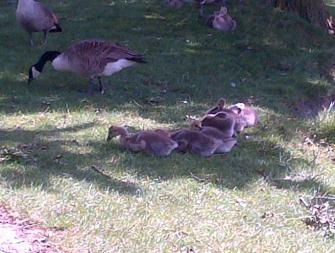 Feeding Family