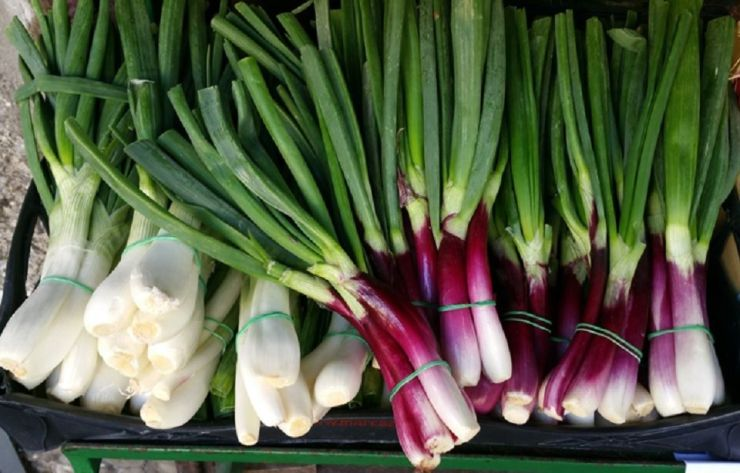 Top 5 Green Onion Benefits and How to Grow