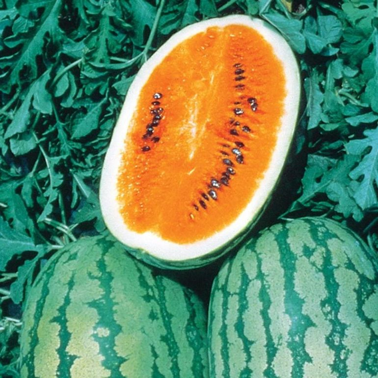 Tendersweet - Types of Melon