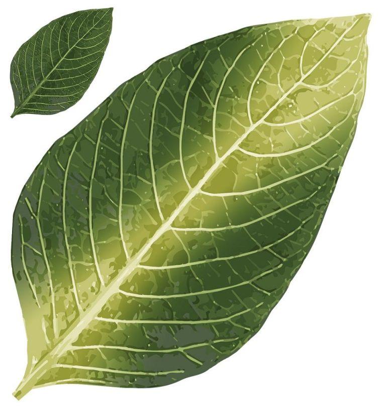 co2 deficiency in plants