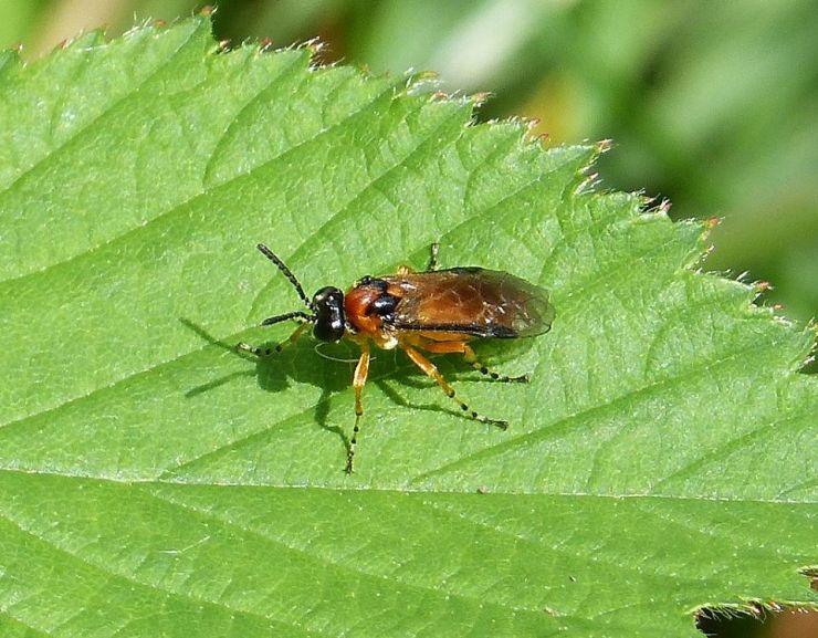 13 Natural Ways to Get Rid of Sawflies
