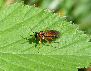 13 Natural Ways to Get Rid of Sawflies
