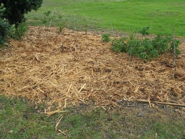 9 Best Types of Garden Mulch