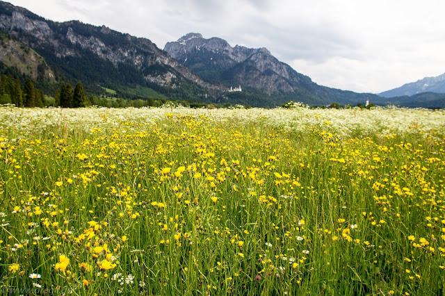 Allgaeuer - Ammergauer Alpen 2015 Teil 1_2