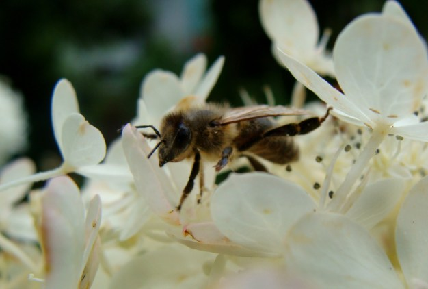 bee-ing in heaven
